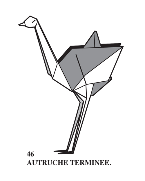 last step diagram Ostrich